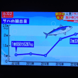 10/17 日本はサバを輸出していた Jchan