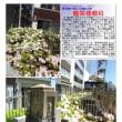 散策 「東京中心部南 346」 龍閑橋親柱