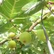 果物いっぱいのバスツアー
