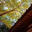 『寺社の銀杏』 御嶽神社