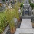 お墓の掃除は草取りから・・・^^;