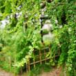 イタドリ、マルバハギ、コムラサキ(赤塚植物園)