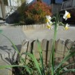 わが家の お花様達 674