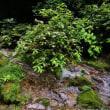 三滝川の流れ(黒山三滝 / 埼玉県越生町)