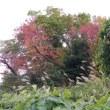 行く秋を惜しみ「家の近所をすたすた歩き」