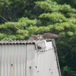 5月27日の鳥撮り散歩・・・