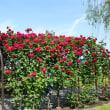 小さなバラ園2
