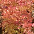 秋雨の後紅葉 2017.11.08  「315」
