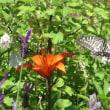 ユリの花にアゲハ