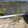 庭の果樹等にスミチオンを散布しました