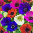 花とキャベツのパスタ