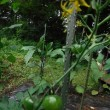 天然のクーラーの清里高原へ~さわやかな高原で高原野菜をどうぞ~標高1000m~2000mの別世界へ