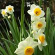 花冠と副花冠