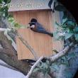 ヤマガラが巣箱の下見に来た!
