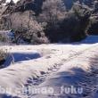 降雪の朝(佐賀県三瀬村にて)