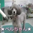 名前入りトリミング犬ご紹介