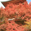 紅葉が見頃です:三明院
