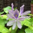 ひとつ目の花
