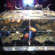 金魚の涼「アートアクアリウム」