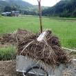農園で枯草運び(2017/8/18)