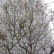 4月19日の桜