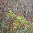 田貫湖の紅葉