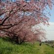 散歩道3月b