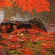 秋雨に紅落。