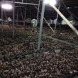 埔里にはキノコを栽培している農家が多いです。