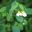 散歩で見かけた生田原の野の花