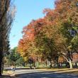 水元公園で秋散歩~3