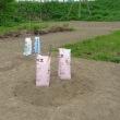 畑作り  苗の定植と種まき  アスパラ