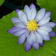 温室の花 (2)