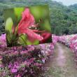 花彩々   恵の雨