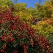 春日公園の紅葉(D810、28-300mm)