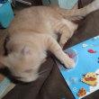 今年も「ワンコ・ニャンコ365カレンダー2019」販売します!!