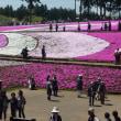 秩父・羊山公園の芝桜