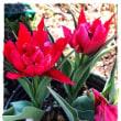 mainasa garden ♪  記録的寒さの中 わが家のバラは いつ咲くのか ?