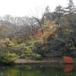 イイギリ - 石神井公園