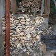 竹炭焼きの準備を始めました。