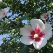 信念を貫く花