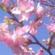 春真っ盛りの一日ですね。