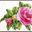 色鉛筆画397 (山茶花)