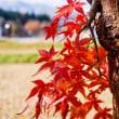 【今日の湯沢】日常をドラマチックに変える、雪ある晩秋風景 ~旧神立保育所前~