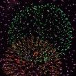 絵に描いたようなキレイな花火の写真が撮れてしまった・・・