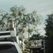 8/15 三日振りに北越三面川での鮎釣りでしたが?魚が小さくて追いが悪くて?