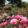 JRウォーキング:「博多駅から美野島商店街と福岡市動植物園へ行こう!」