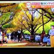 11/17 森田さんの 黄色の並木道もいい