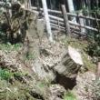 竹藪の整備