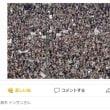 日本は、2周回遅れだそうだ。 強制ワクチン接種法・・・イタリア